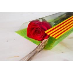 Rosa Vermella 50 cm Muntada