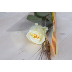 Rosa Blanca 60 cm Muntada