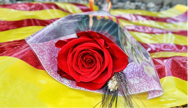 Les millors roses